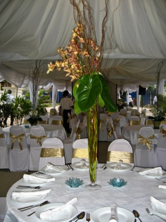 banana-cafe-canopy-chairs-0511